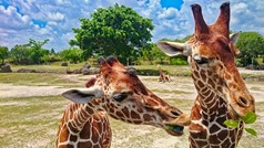 Miami Zoo is a top destination for Families